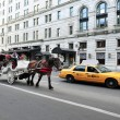 Horse and Carriage Rides in Central Park — Foto de Stock