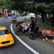 Horse and Carriage Rides in Central Park — 图库照片
