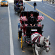 Horse and Carriage Rides in Central Park — Stock Photo