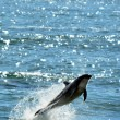 Stock Photo: Dolphin jump out of water