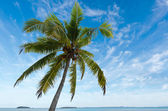 Coconut Tree in Aitutaki Lagoon Cook Islands — Stock Photo