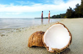 Opened coconut on sandy beach — Stockfoto