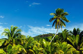 Coconut Trees in Aitutaki Lagoon Cook Islands — Stock Photo
