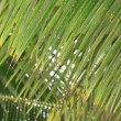 Tropical rain over a coconut palm trees — Stock Video