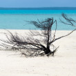 Stock Photo: Landscape view of Nude Island in Aitutaki Lagoon Cook Islands