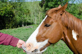 Man feeding his horse. — Stock Photo