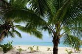 Landscape of Moturakau Island in Aitutaki Lagoon Cook Islands — Foto de Stock