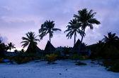 Coconut Tree in Aitutaki Lagoon Cook Islands — Stock Photo