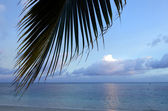 Coconut Tree in Aitutaki Lagoon Cook Islands — Stockfoto
