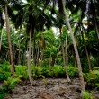 Stock Photo: South Pacific Rain Forest Jungle