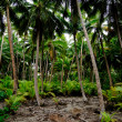 South Pacific Rain Forest Jungle — Stock Photo