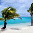 Coconut Tree in Aitutaki Lagoon Cook Islands — Foto de Stock