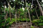 South Pacific Rain Forest Jungle — Stock Photo