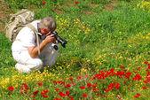 Anemon kırmızı çiçek çiçek — Stok fotoğraf