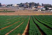 Moshav İsrail — Stok fotoğraf