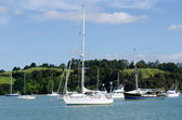 Opua marina at the Bay of Islands New Zealand — 图库照片
