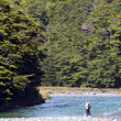 Fisherman fly fishing in Fiordland — Stock Photo
