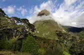 Fiordland - New Zealand — Foto Stock