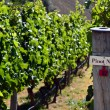 Pinot Noir sign on grape vine — Stock Photo #39994447
