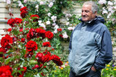 Mature man looks at red roses flower — Stock Photo