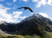Kea - New Zealand wildlife — Stock Photo