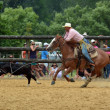 Постер, плакат: New Zealand Rodeo Steer roping