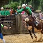 ������, ������: New Zealand Rodeo Bull riding
