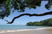 Doubtless bay Northland New Zealand — Stock Photo
