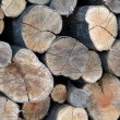 Firewood logs — Stock Photo