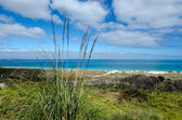 Karikari Peninsula - New Zealand  — Stock Photo