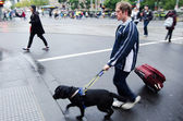 Blind man is led by his guide dog — Stock Photo