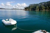 Roberton Island in the Bay of Islands New Zealand — Stock Photo