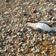Death seagull — Stock Photo