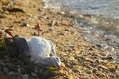 Death seagull — Stock Photo