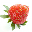 Close-up of single delicious bio strawberry — Stock Photo