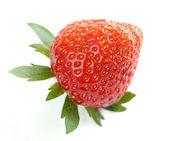 Gros plan de fraisiers bio délicieux unique — Photo