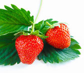 Close-up of two fresh vibrant strawberries — Stock Photo