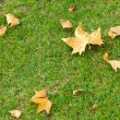 Close-up of autumn leaves on green grass — Stock Photo