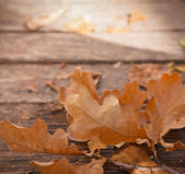 Close-up of brown leaves on wooden ground — Stock Photo