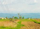 Postes telefónicos caídos en el campo — Foto de Stock