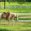 Stock Photo: Horse in paddock, sunshine