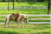 Horse in the paddock, sunshine — Stock Photo