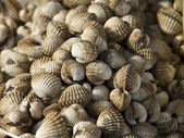 Small Clams at Fish Market — Stock Photo