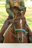 Bir kovboy atın üzerinde detay — Stok fotoğraf