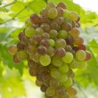 Fresh green and red grapes — Stock Photo