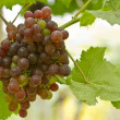 Fresh green and red grapes — Stock Photo #14447945