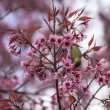 Cute bird sitting on blossom tree branch — Photo