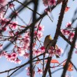 Cute bird sitting on blossom tree branch  — Foto de Stock