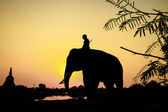Silhouette action of elephant in Ayutthaya Province, thailand — Stock Photo