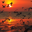 Birds flying in sunset — Stock Photo